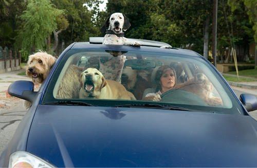 Abituare il cane alla macchina